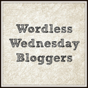 Wordless Wednesday Bloggers After the Snow Photos