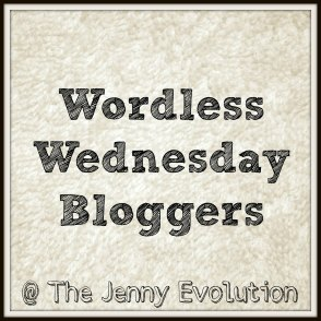 Wordless Wednesday at The Jenny Evolution