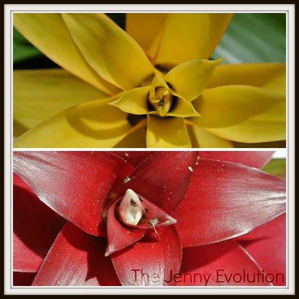 bromeliads red yellow